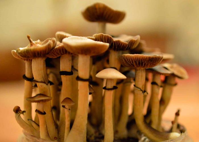 Культ грибов в Центральной Америке